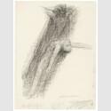 Käthe Kollwitz, Tod und Jüngling, aufschwebend, um 1922/23, schwarze Kreide, gewischt auf Zeichenpapier, NT 963 © Käthe Kollwitz Museum Köln